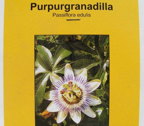 passionsblume passiflora anzucht aus samen jk 39 s pflanzenblog. Black Bedroom Furniture Sets. Home Design Ideas