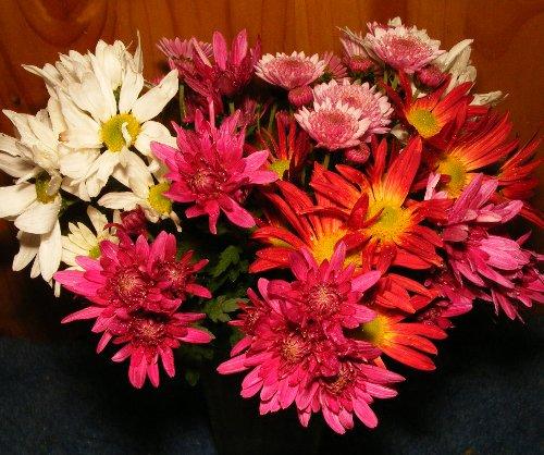 chrysanthemen sind prima schnittblumen f r die vase jk 39 s pflanzenblog. Black Bedroom Furniture Sets. Home Design Ideas