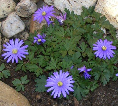 Bl ten jk 39 s pflanzenblog part 2 - Pflegeleichte zimmerpflanzen mit bluten ...