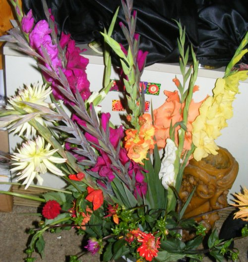 gladiolen gladiolus und dahlien dahlia jk 39 s pflanzenblog. Black Bedroom Furniture Sets. Home Design Ideas