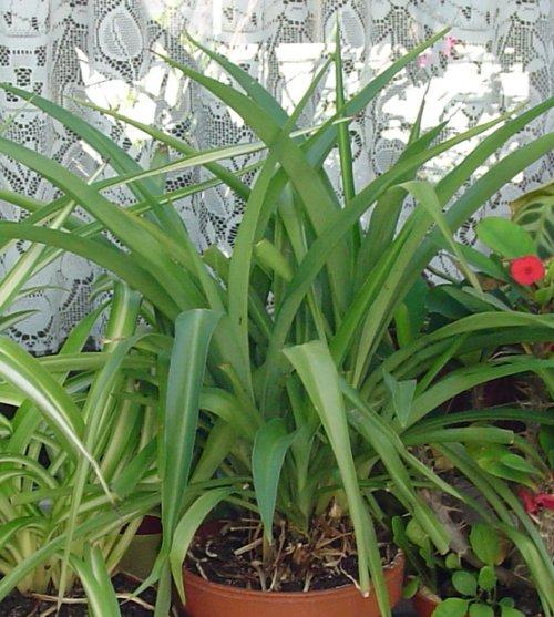 pflanzen f r nordfenster zimmer pflanzen botanik green24 hilfe pflege bilder. Black Bedroom Furniture Sets. Home Design Ideas